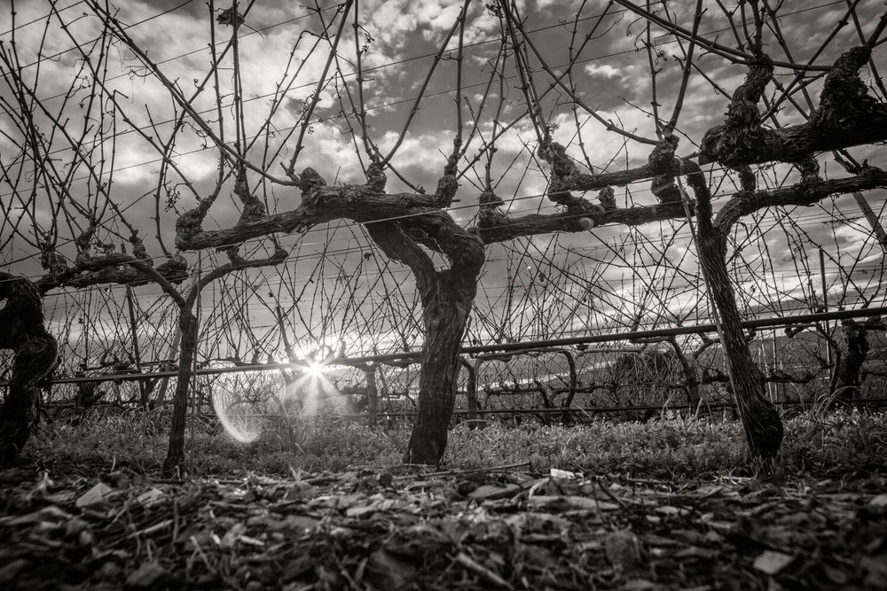 Landscape + Vineyard 23