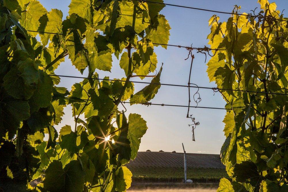 Wine Country 9.jpg