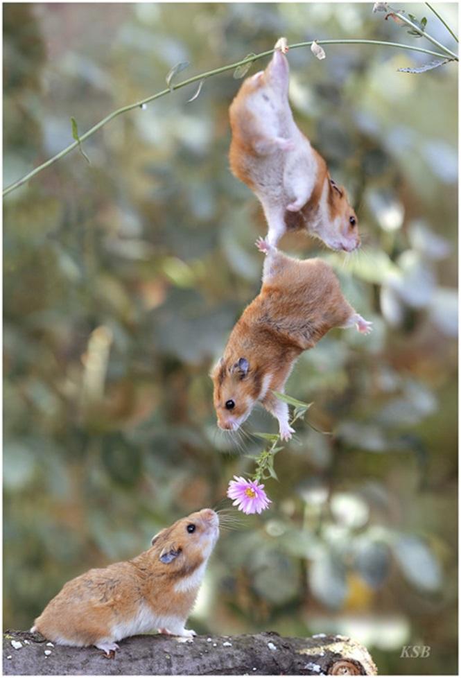 https://www.gadoo.com.br/entretenimento/35-fotos-demonstrando-como-os-animais-sabem-se-relacionar/