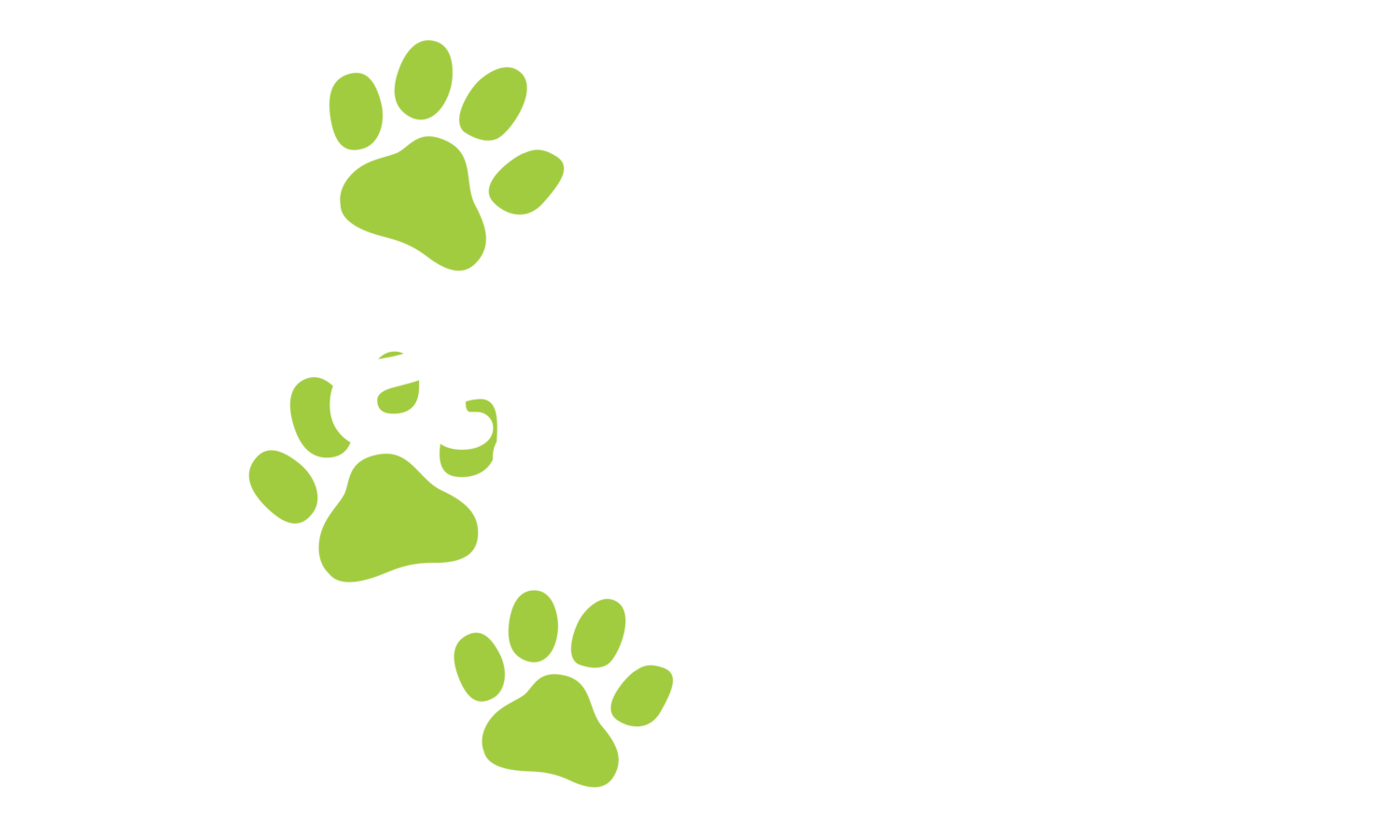 Puppy Pre-School Perth | Dog Training Perth | Waggle Tails