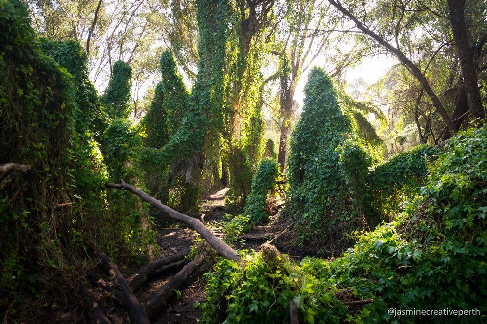 landscape_secret_garden_photography_perth (1 of 1).jpg
