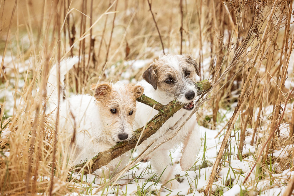 Dog Photographer, Loughborough