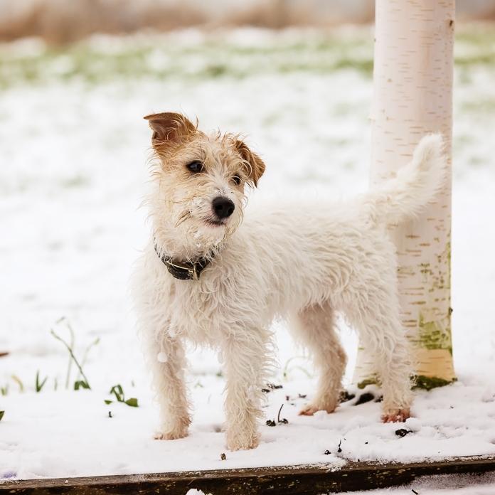 Dog Photographer Loughborough
