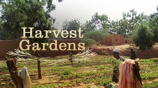 HarvestGarden.jpg