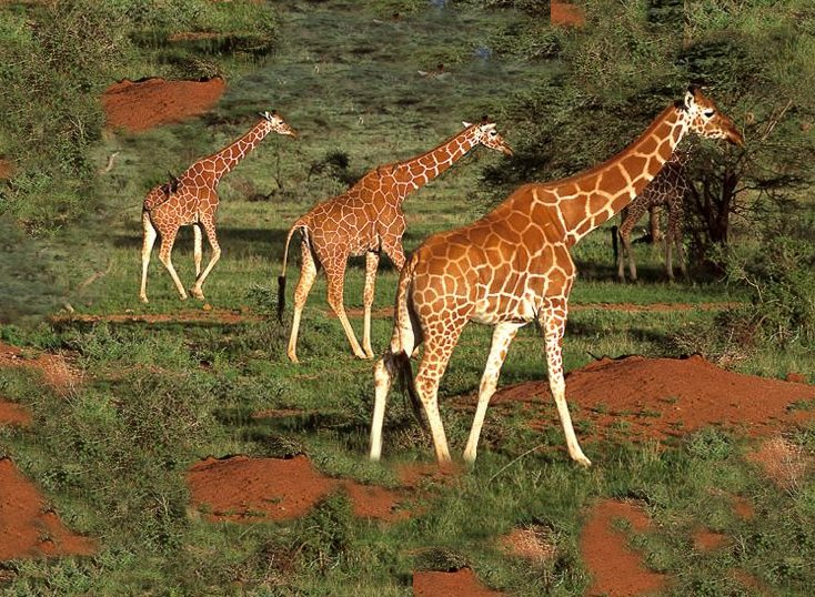 african_safari3.jpg