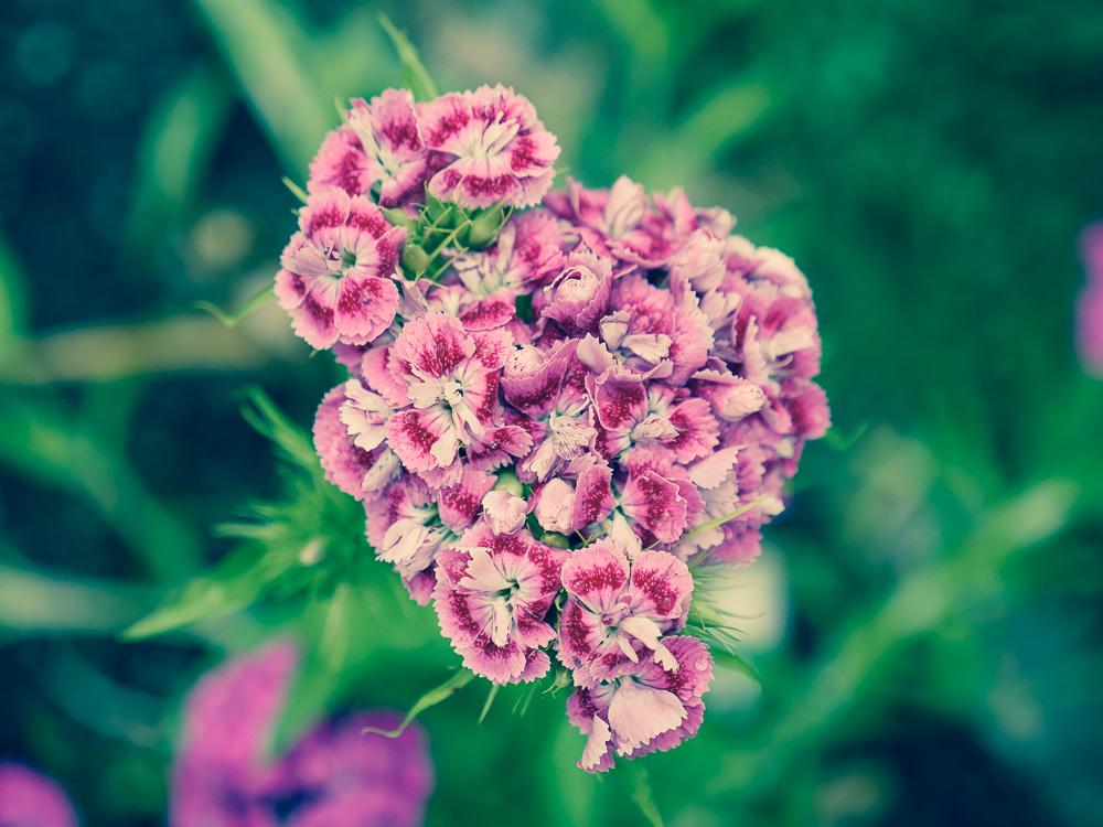 Nydelig blomst i hagen til Alena