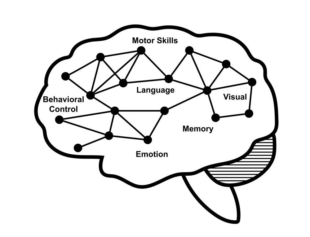 the_brain-02.jpg