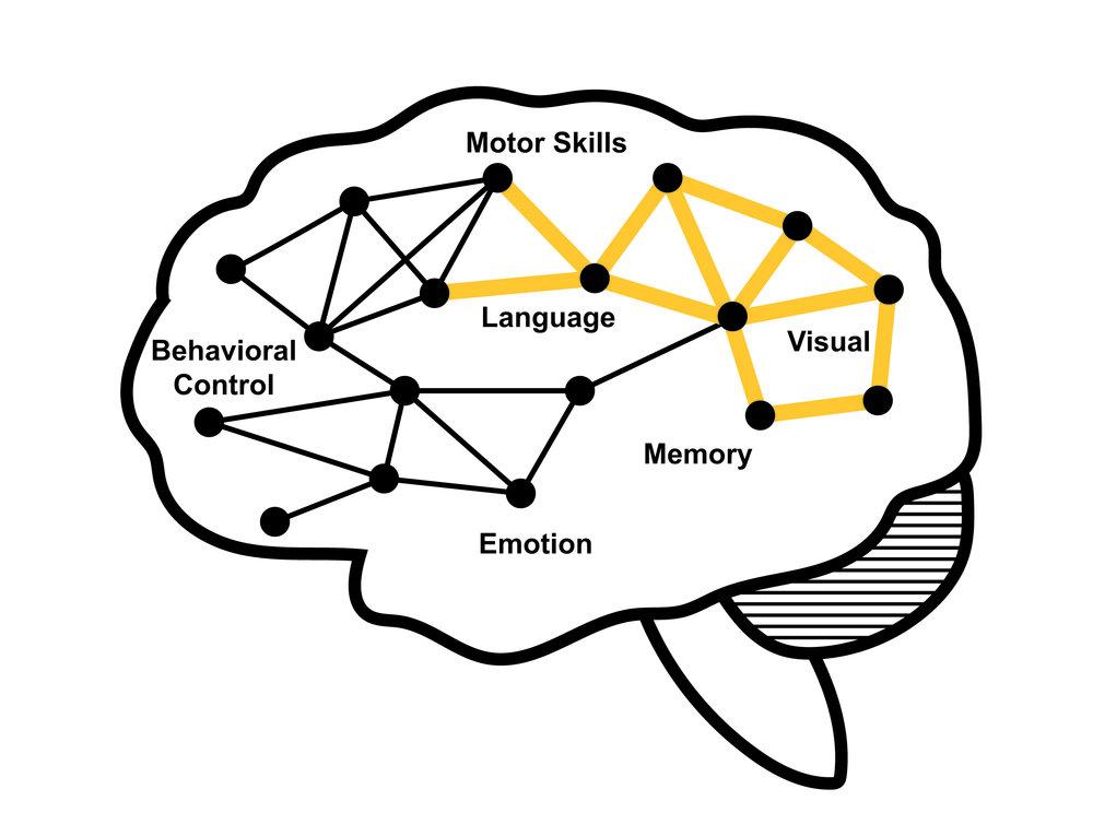 the_brain-03.jpg