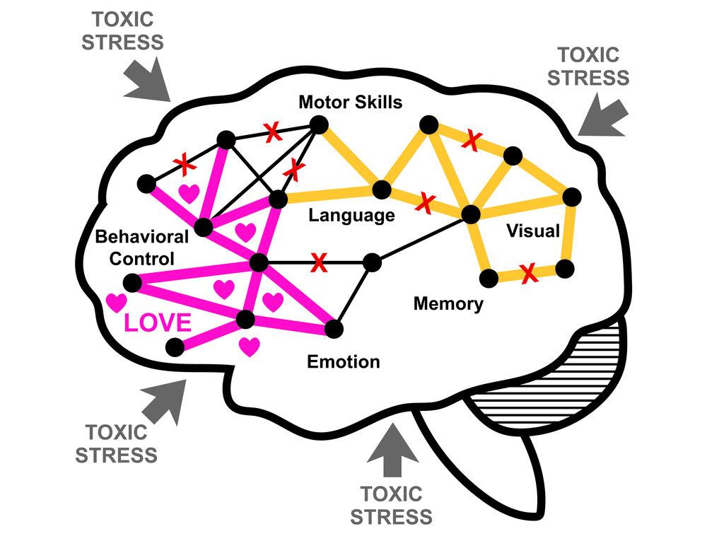 the_brain-05.jpg