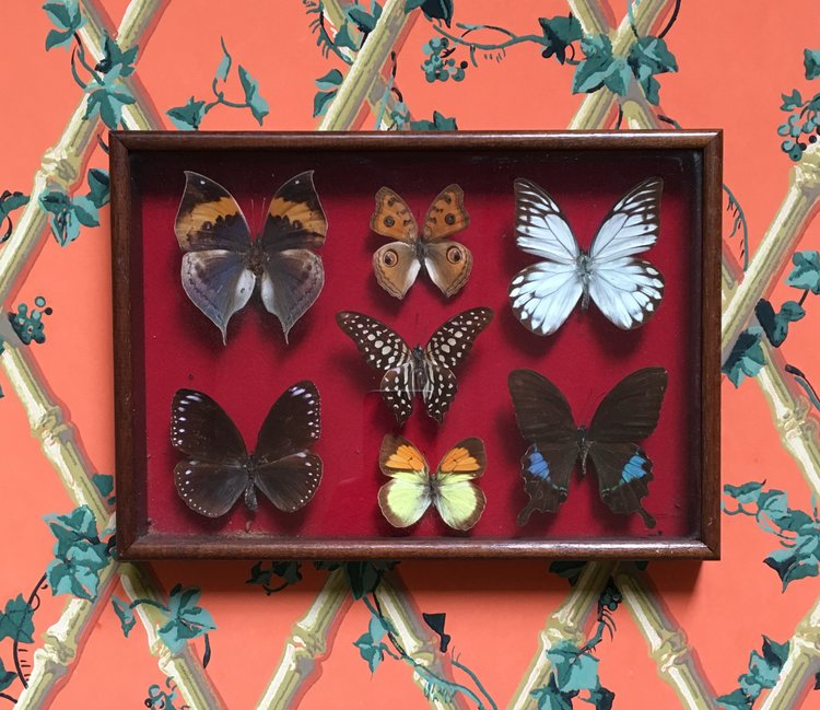 Butterfly Display Case.jpg