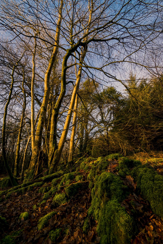 Ravensdale Tree.jpg