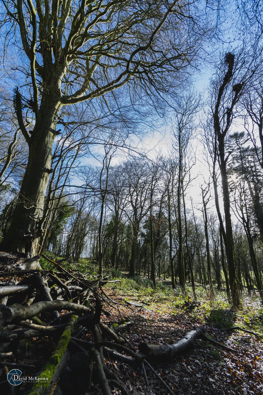 Bellurgan Forest.jpg