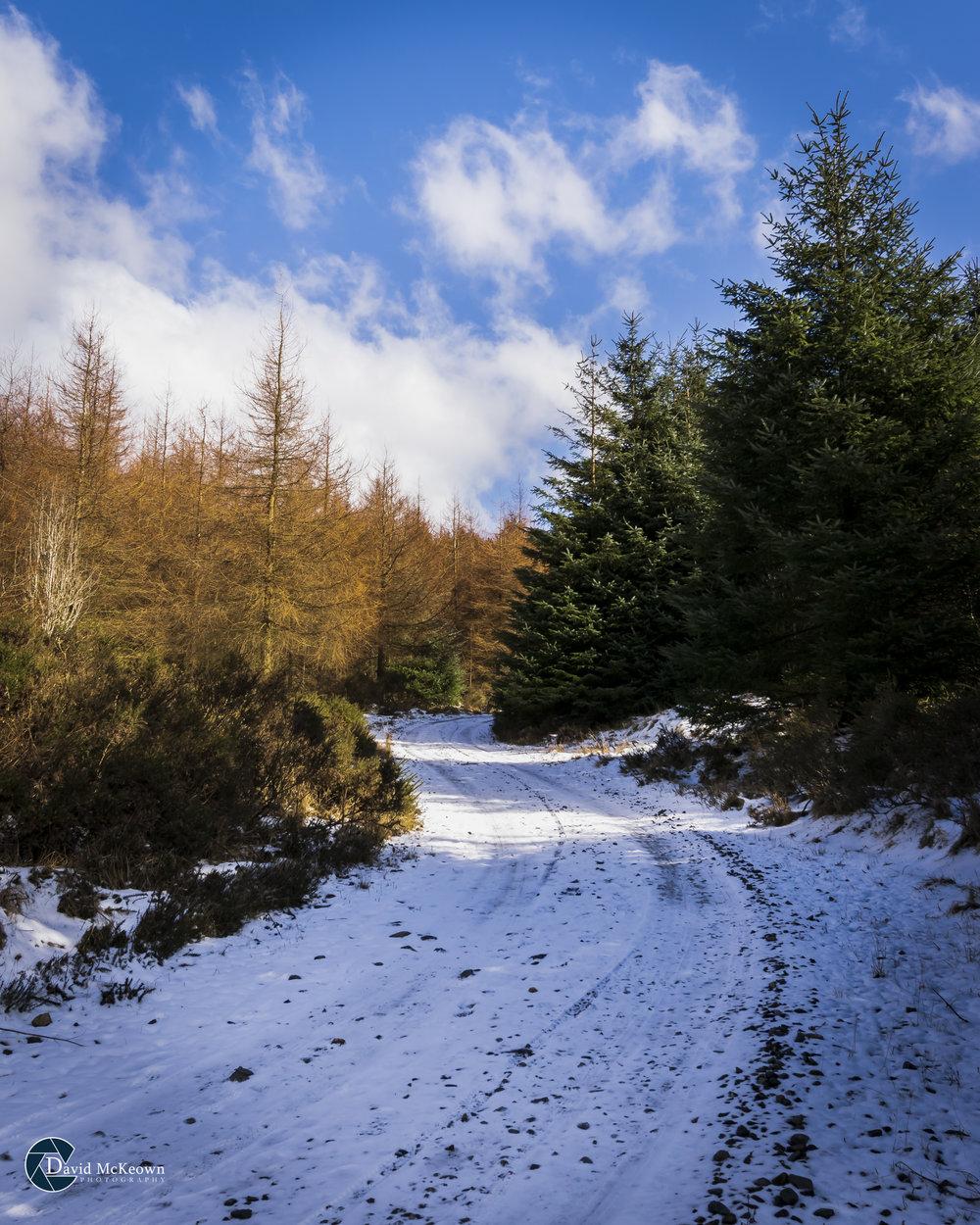 Lumpers Snow web.jpg