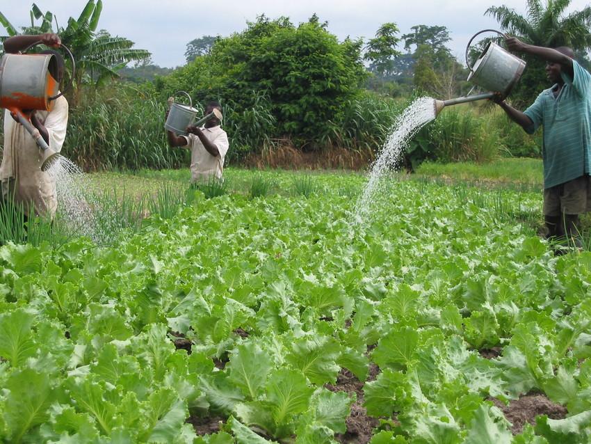 irrigatie.jpg
