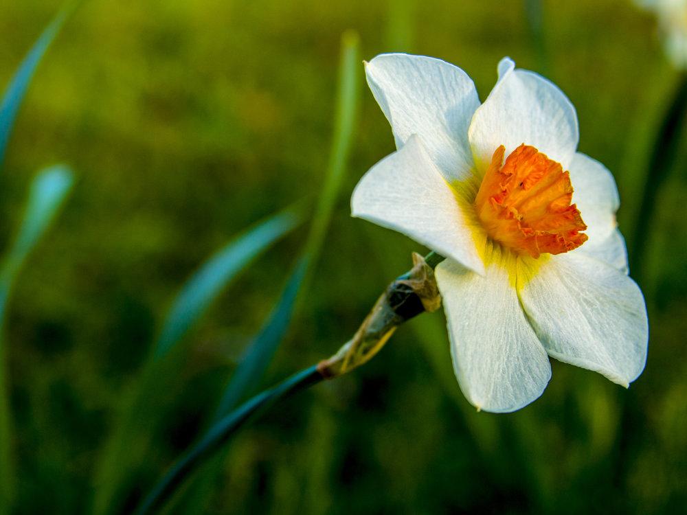 flowerinmom'syard.jpg