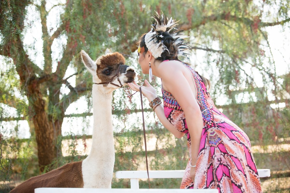 Shannon Henry Alpaca Masquerade 1