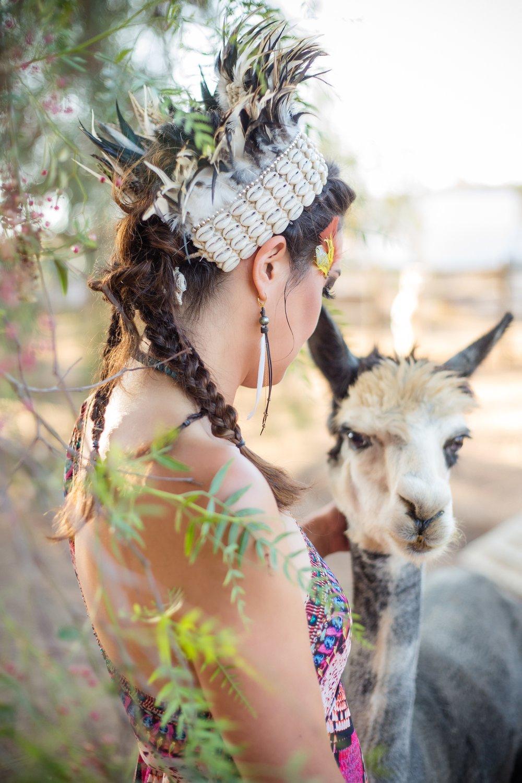 Shannon Henry Alpaca 4