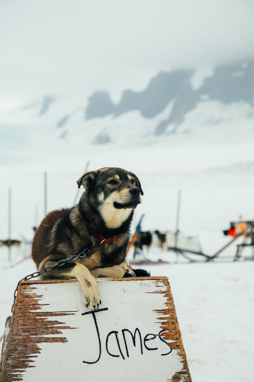 Alaska-95.jpg