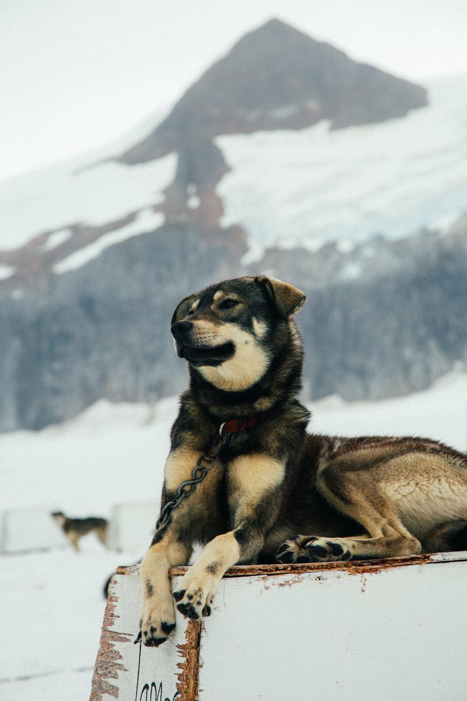 Alaska-102.jpg