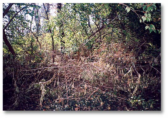 """The Woods"", an impenetrable wilderness wasteland with dangers such as dead and falling trees Misused as a dumping ground prior to cleaning and clearing in 1994."