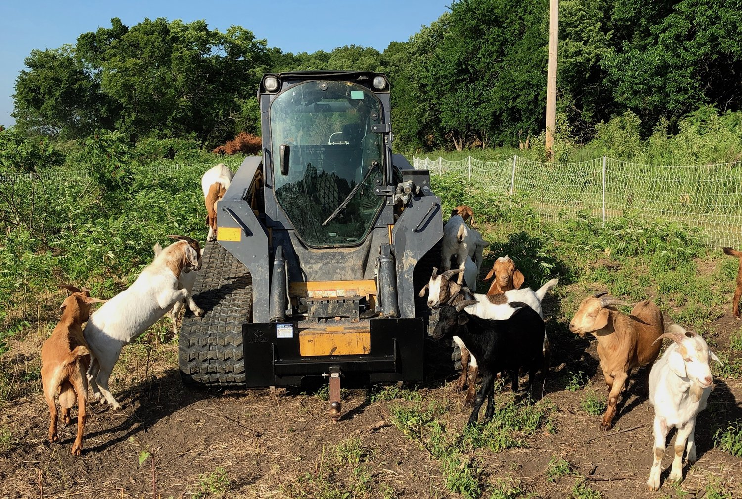 A Tractor vs Skid Steer For Your Farm or Homestead