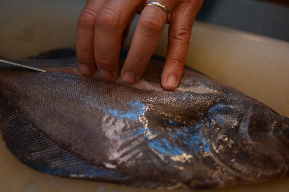 flounder fillet tutorial