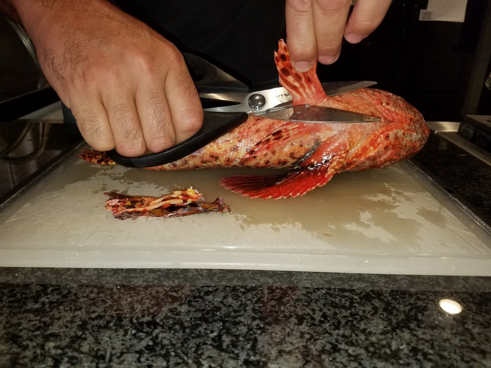 sculpin cleaning tutorial