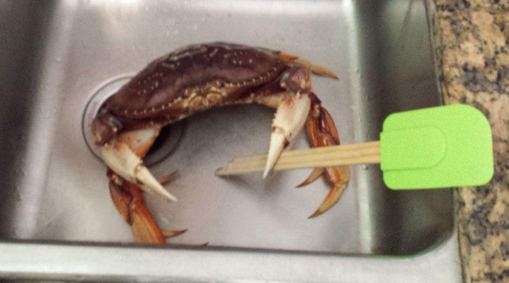 Fighting Crab.jpg