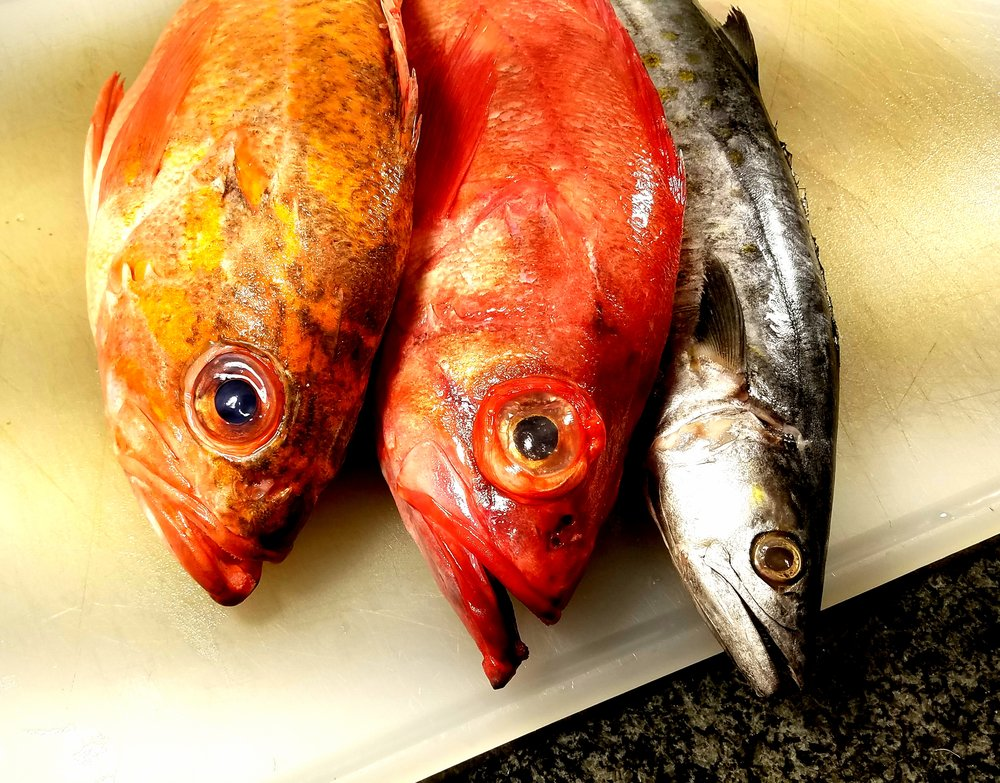 3 fish striped bass ocean perch