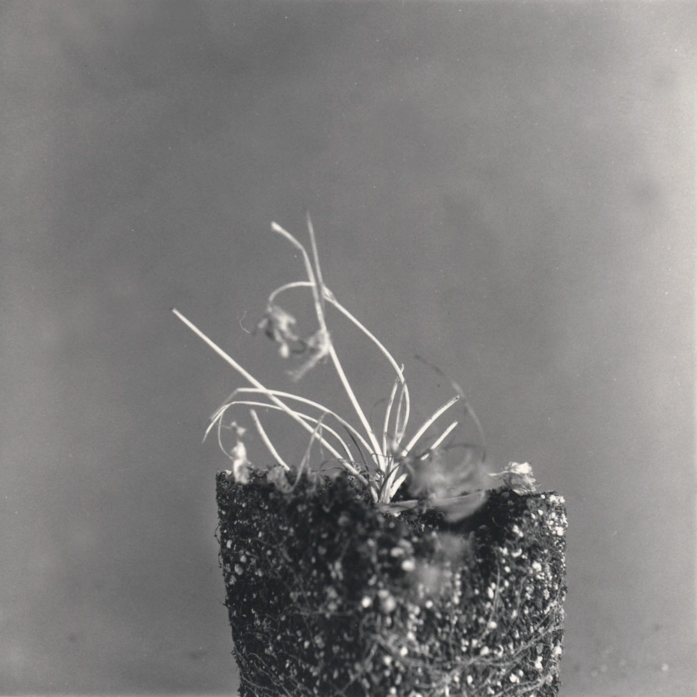 Plant Life.First Attempts.03