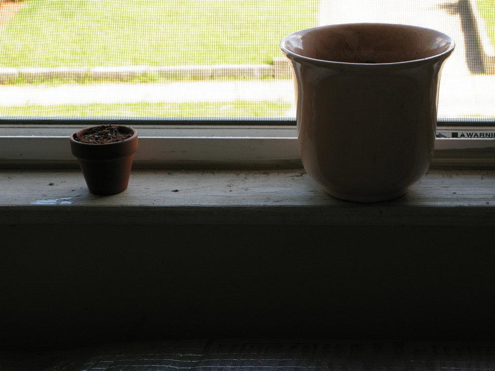 Plant Life.Basil.36