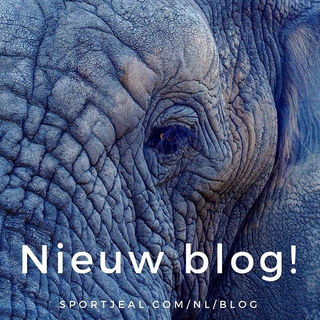 """Hallo!  Wij hebben weer een nieuw artikel voor je geschreven!  Lees meer over wat training geven, olifanten en feedback met elkaar te maken hebben in het nieuwste blog: """"De blauwe olifant""""  #linkinbio #sportjeal #sporten #healthy #sports #training"""