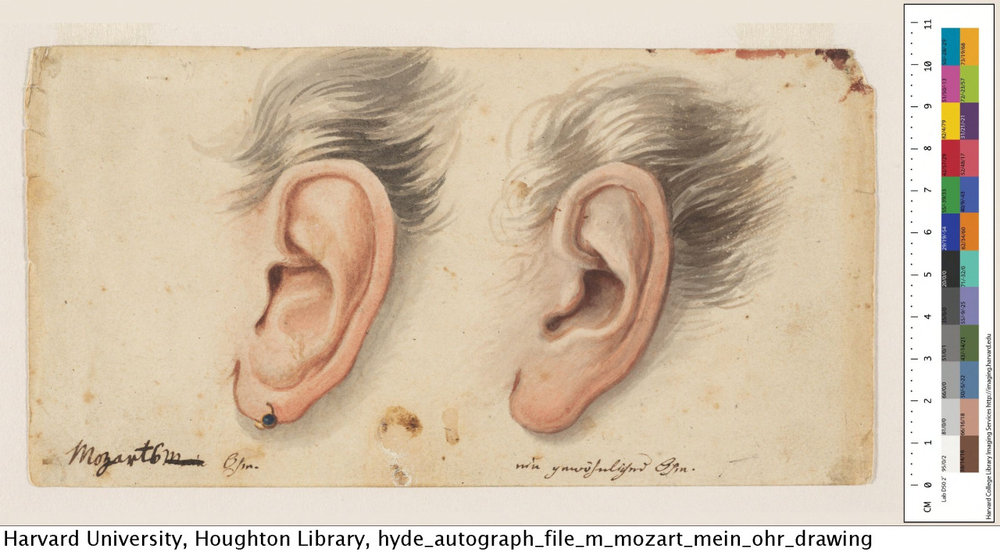 houghtonlib :     Comparison of Mozart's ear with an ordinary ear.     Autograph File M    Houghton Library, Harvard University