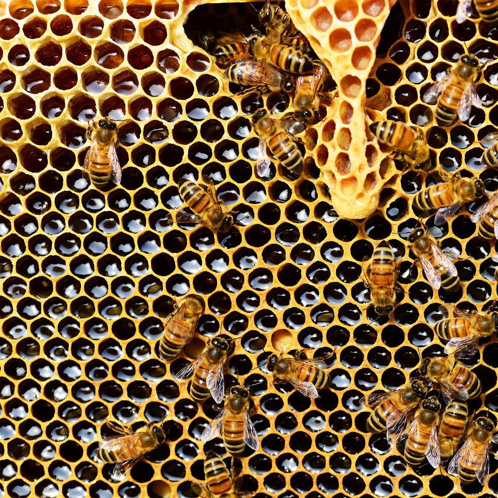 Honeycomb (1).jpg