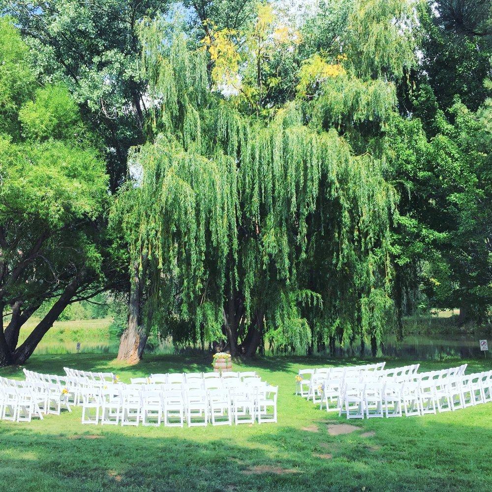 willow_tree_1.jpg