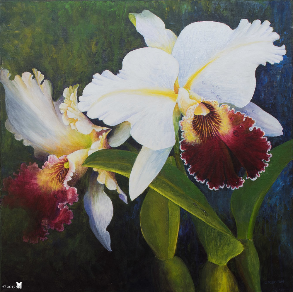 "Cattleya Acrylic on Canvas 24""x24"" 2006"