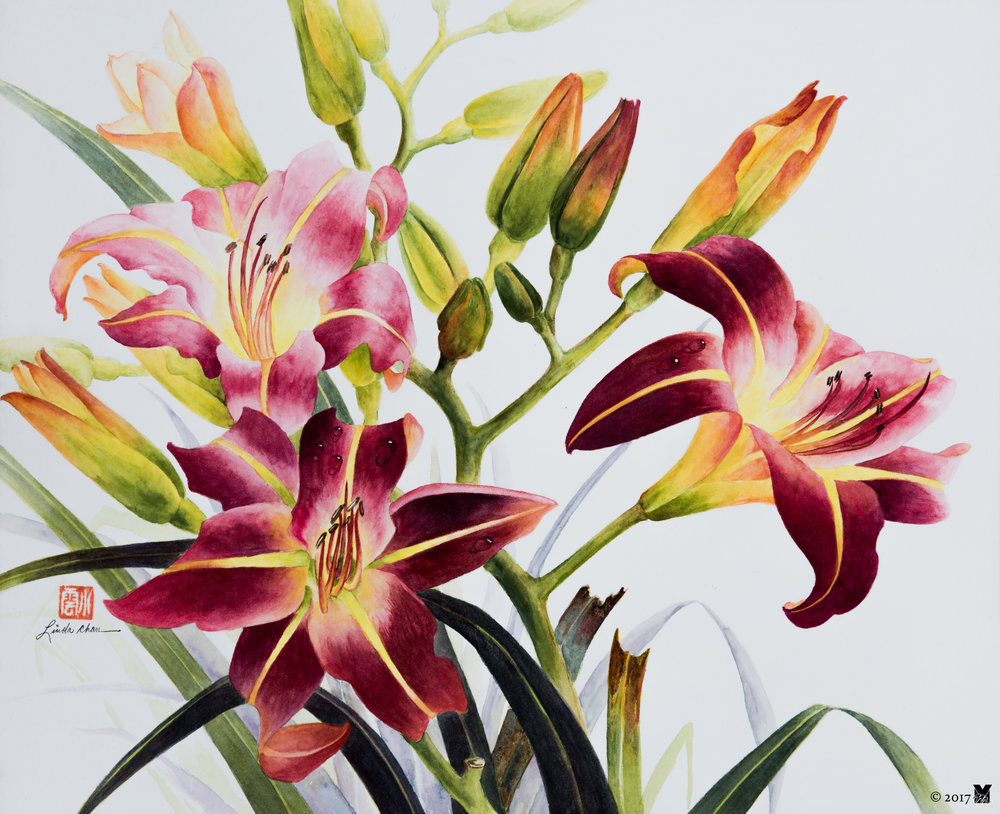 "Day Lilies Watercolor on Paper 14""x18"" 2009"
