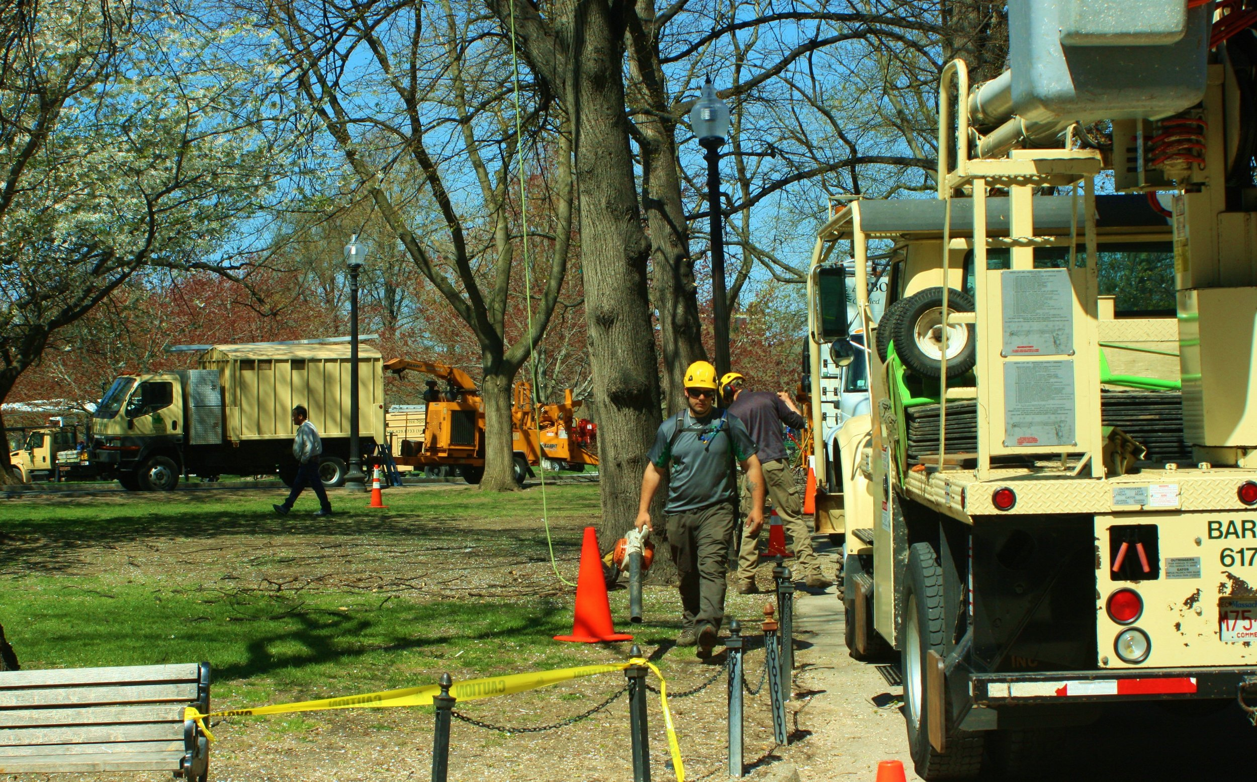 BTSE joined forces with other professional arborists to help care for public trees throughout Massachusetts