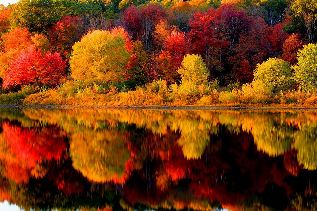 Developing research suggests that autumn colors may be part of a tree's defenses.