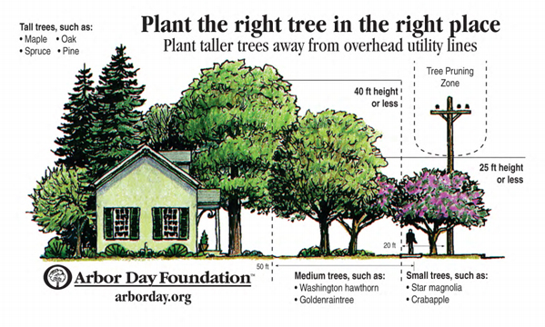 Determining the proper species for the potential planting area is critical to long term success, saving time and money, while avoiding future disappointment. (image arborday.org)