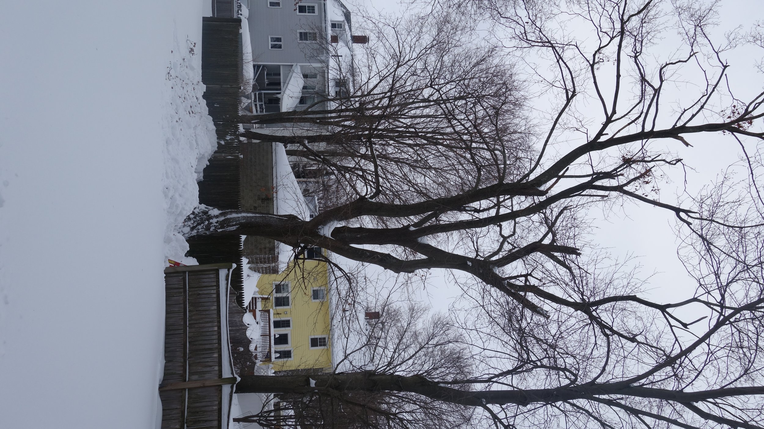Winter can provide unique opportunities for equipment access and may be a preferred time for some activities such as performing tree removal.