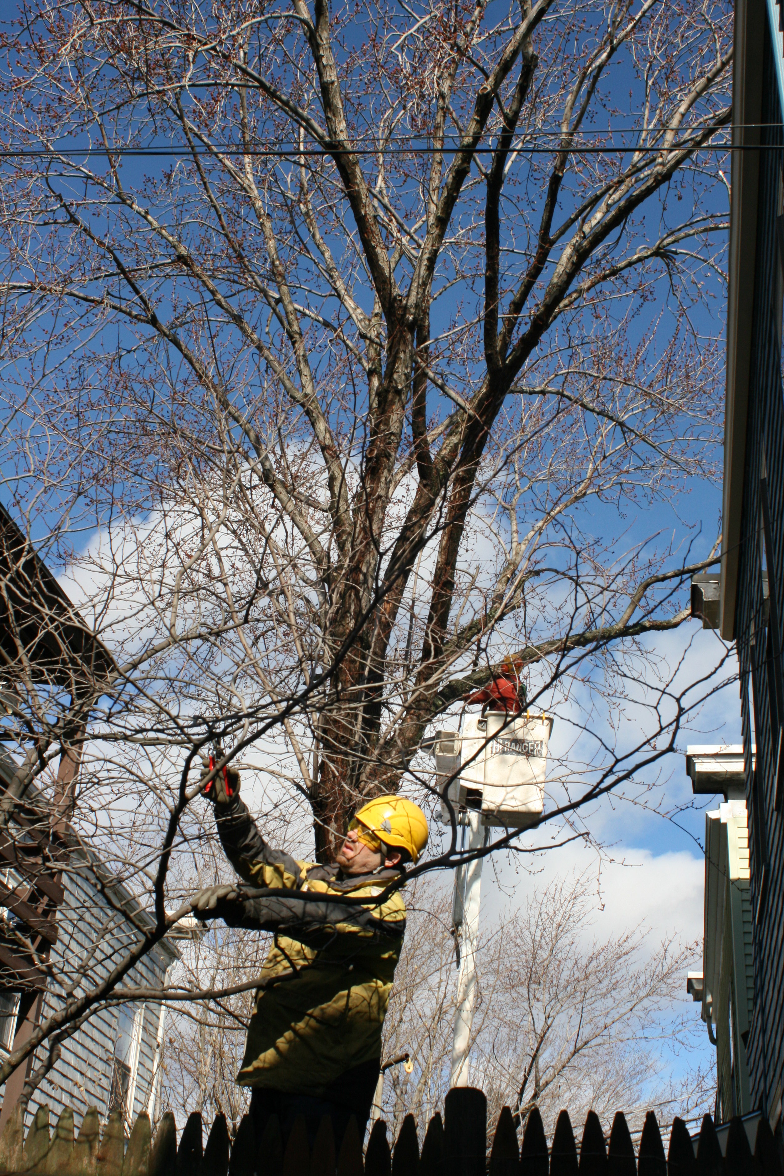 During fall and winter, branch and canopy structures are exposed facilitating the quick detection of problems.