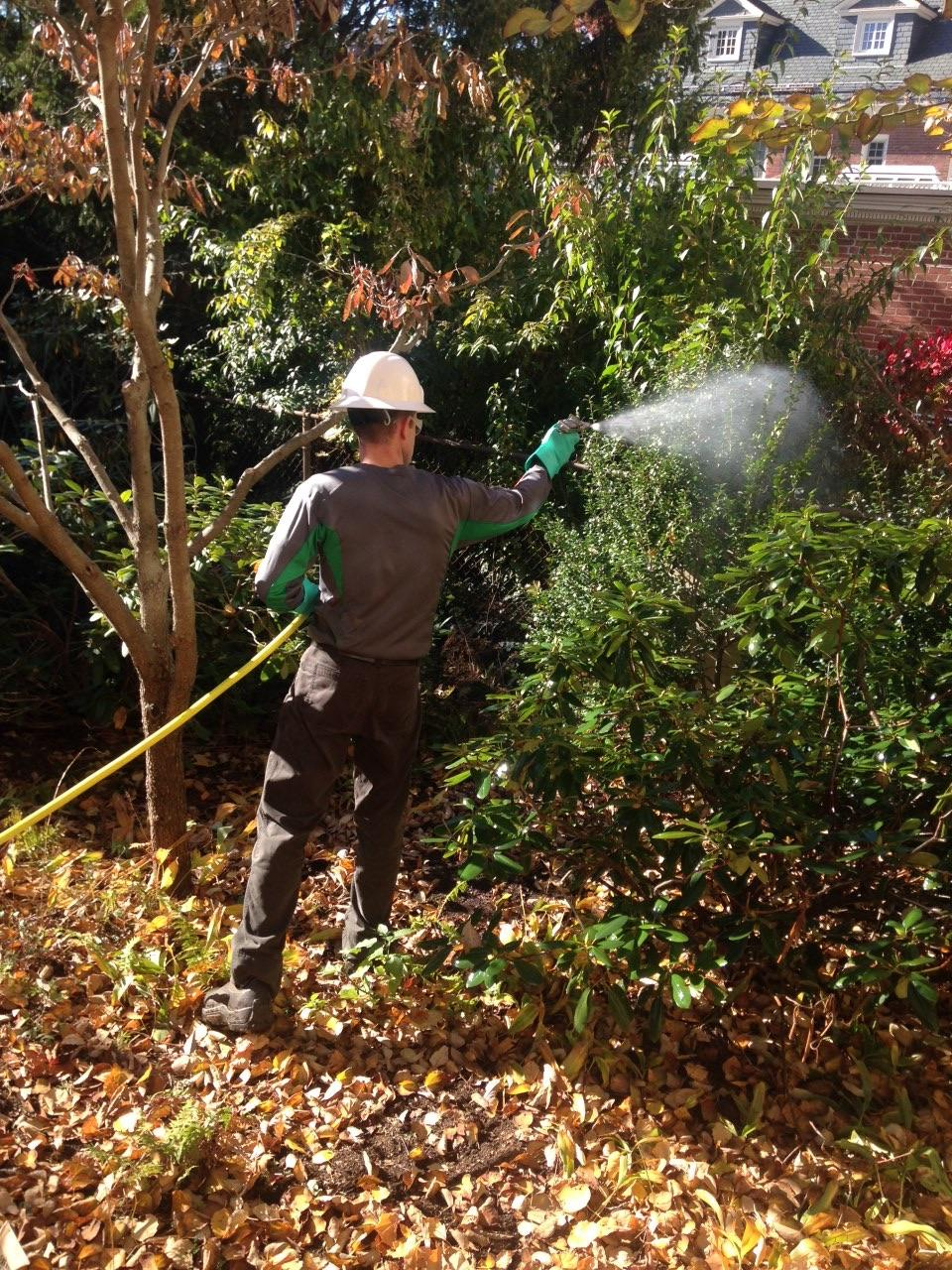 Anti-desiccants are an effective way to help protect evergreen foliage from dehydration and winterburn damage.