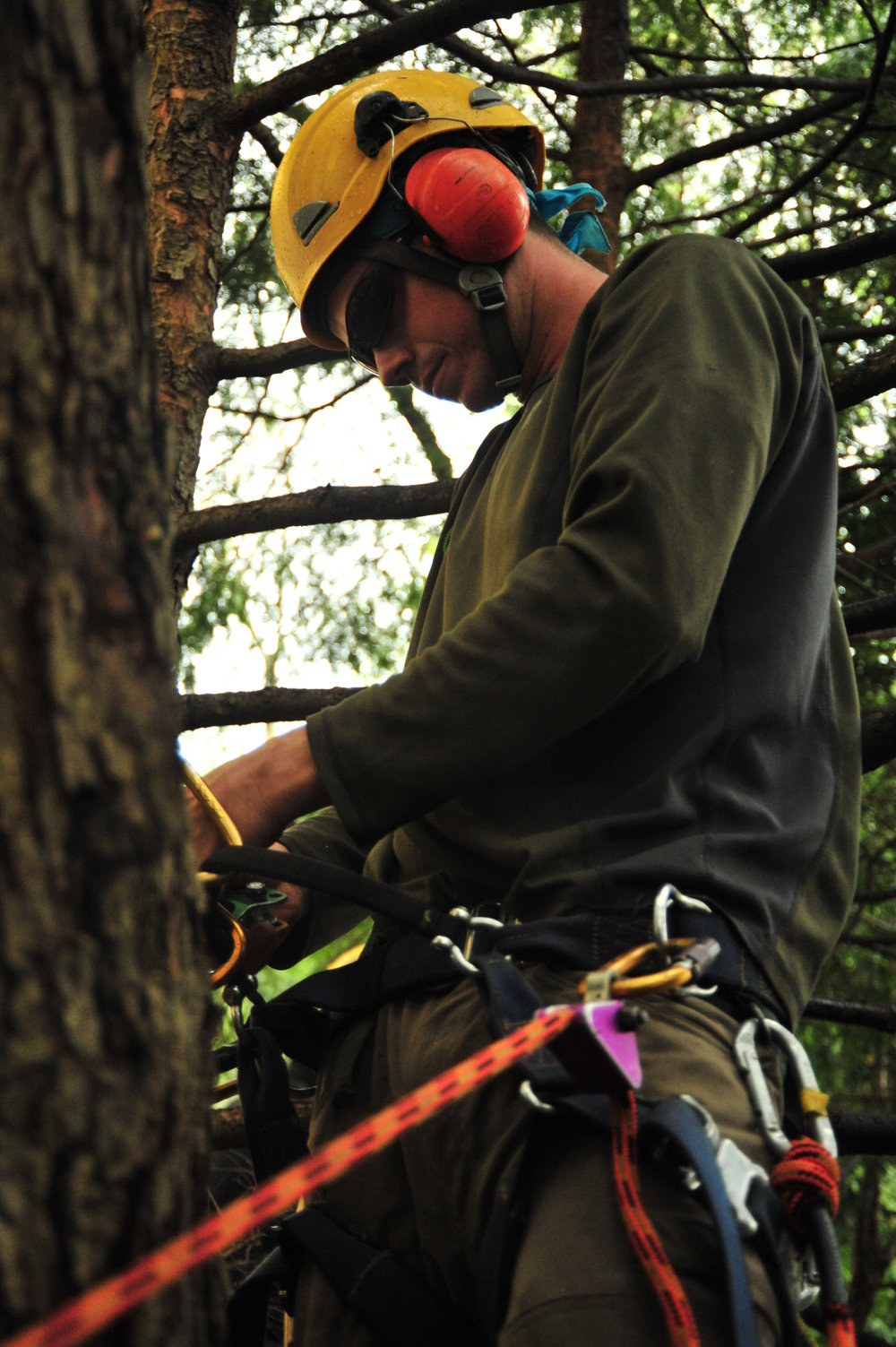 Safe tree work requires extensive knowledge of tree physics and biology, which can take years of experience and study to acquire.