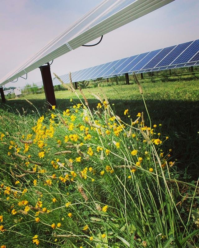 Happy Earth Day! May nature's beauty continue to blossom, alongside new technology and blossoming industries. ⠀ ⠀ #electricamerica #earthday2018 #earthday #flowersofinstagram #ontheroad  #energy  #naturalbeauty #powerplants #power #americanpower  #traveler #infrastructure  #walkwithlocals ⠀  #fieldofgold #flowersonflowers  #farm #agriculture #northcarolina #rural #americancountry #solar #ncsolar  #backtothecountry #ontheroad #beauty #⚡️ 🇺🇸⠀