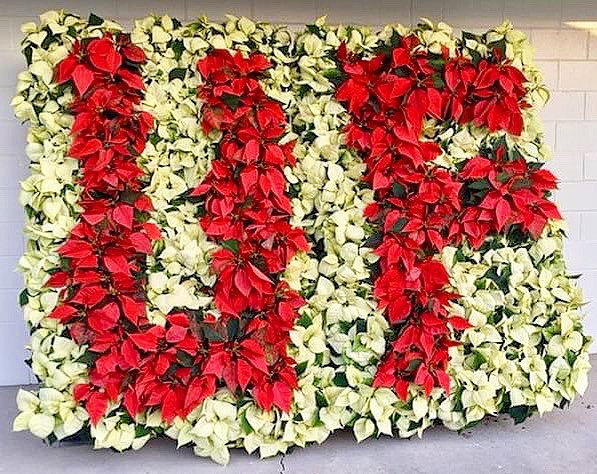 GO @UFhortsci! 🌺🐊😆 __________ The University of Florida Environmental Horticulture Student Club will be holding it's annual Poinsettia sale on Friday, December 8th 8am - 3pm. The sale is happening at the Horticulture Greenhouses behind Fifield hall. __________ 📍2550 Hull Rd. Gainesville, FL 32611. __________ 📸: @drakedg • •  #BestOfGainesville #ufhorticulture #poinsettia #poinsettias #plantpower #flowerstagram #flowers #florida #orangeandblue #ufalum #gainesville #gainesvillefl #instagram_florida #LoveFL #floridalife #gogreater #uf #gogators #gatornation #itsgreatuf #theswamp #sunshinestate #floridagators #uf17 #uf21 #instachamber #whyilovegnv @instachambergnv @uflorida