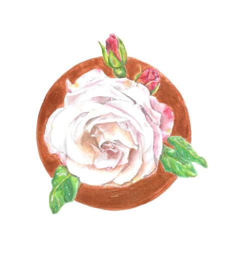 Keita Thomas - Rose Watercolour - Rose Remembered