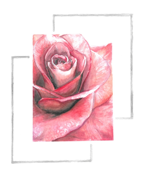 Keita Thomas - Rose Watercolour - Rose in the Balance