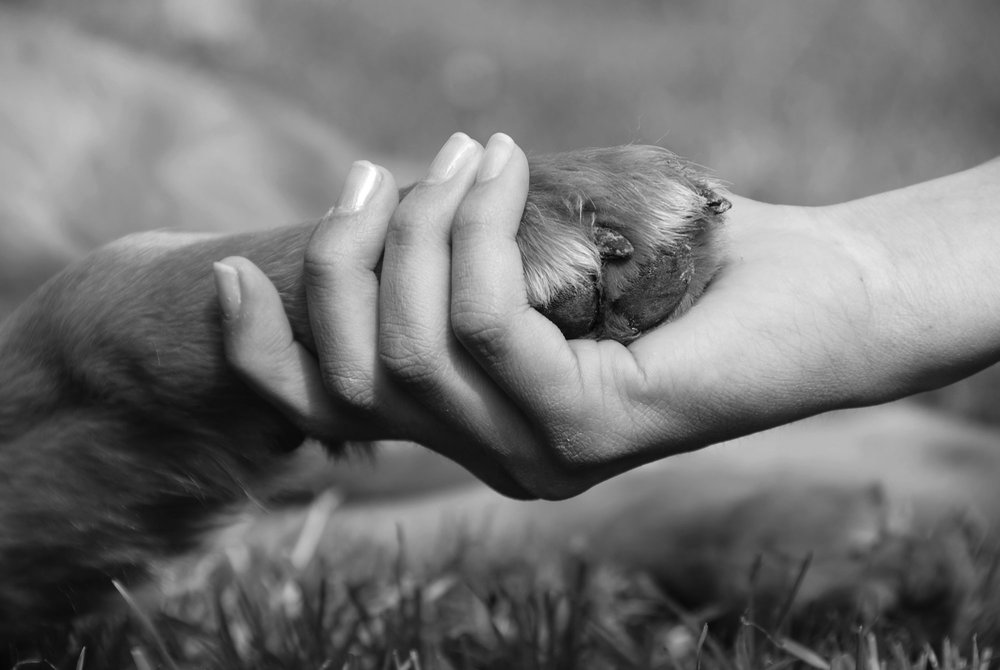 What is Reiki Like for Animals?