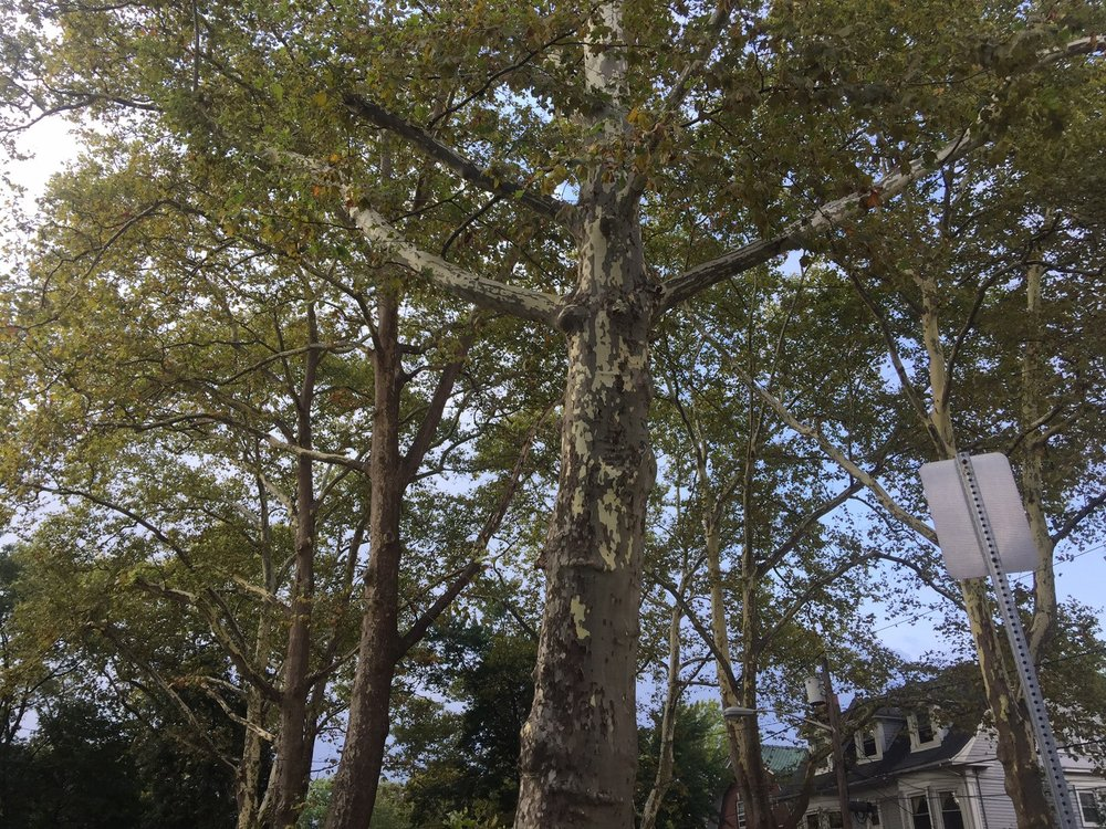 Newark's Forest Hill residents put the 'neighbor' in neighborhood – Brick City Live